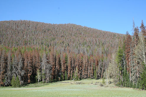 PICT - 800 Million Dead Standing Trees
