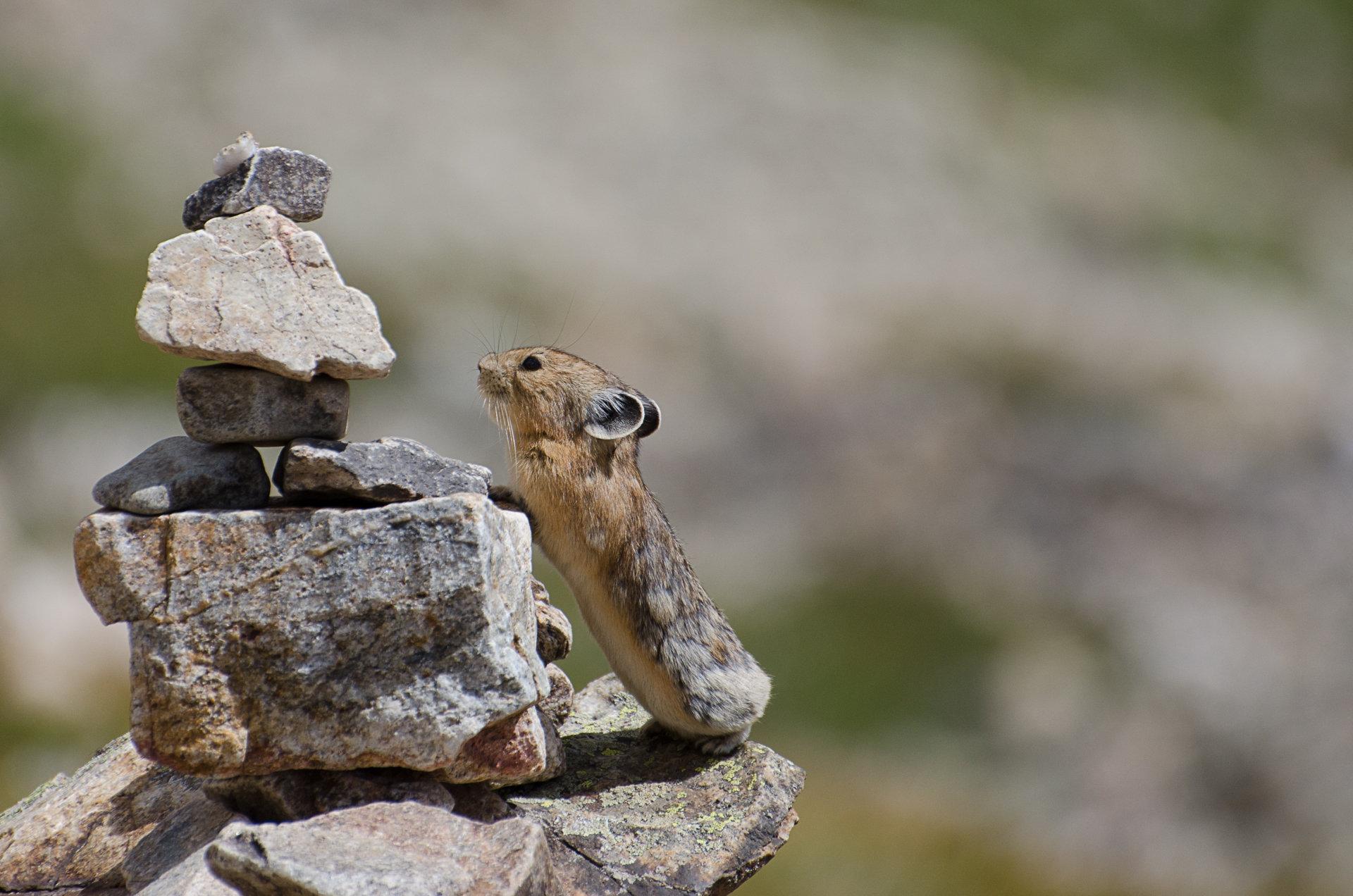 PICT - 2016 Winning Photo - Colorado Parks and Wildlife