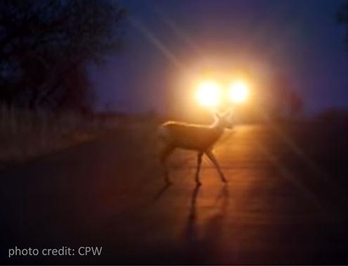 PICT - Deer Road Headlights - CPW