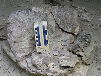 PICT - Fossil Coral - National Science Foundation
