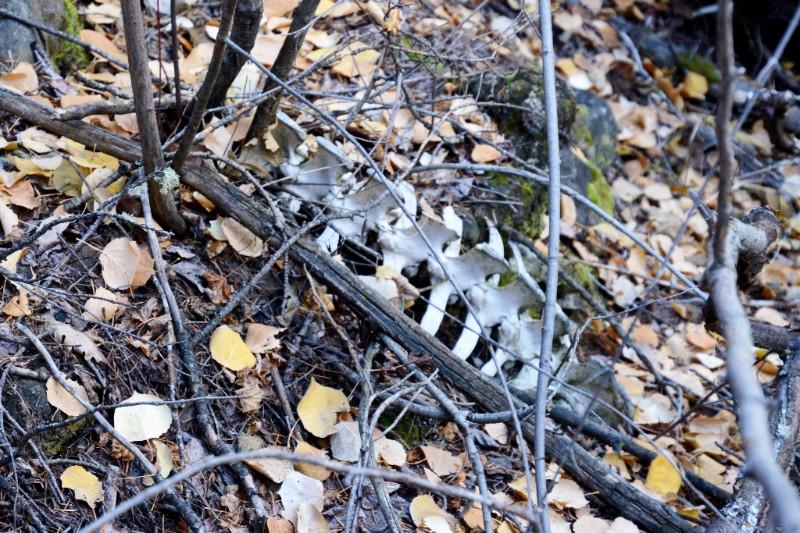 PICT Bones from Predator Kill - CPW
