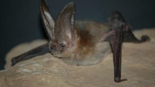PICT Bat - CPW