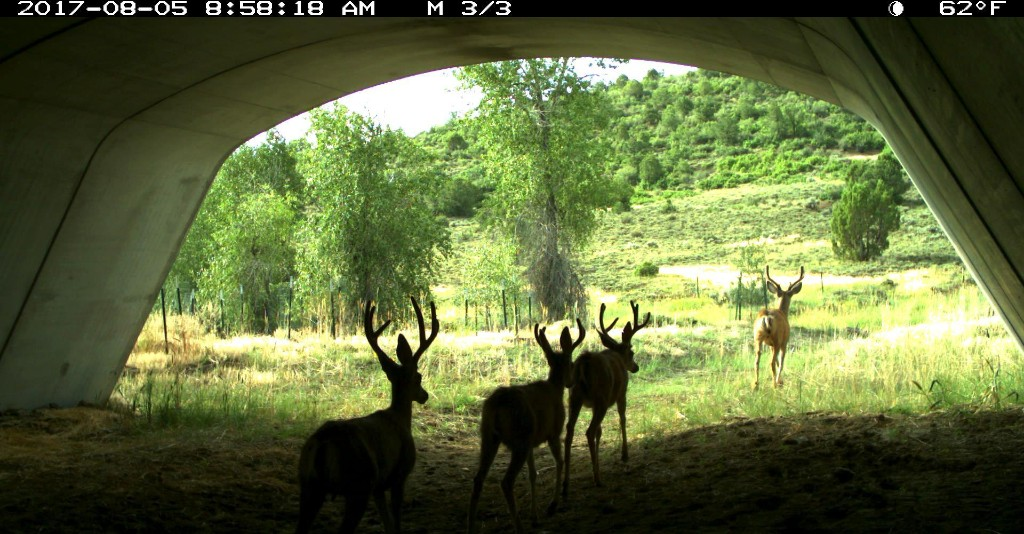 PICT Deer Underpass - CPW