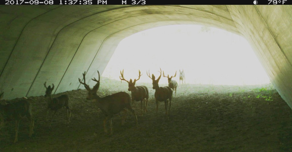 PICT Deer Underpass 2 - CPW