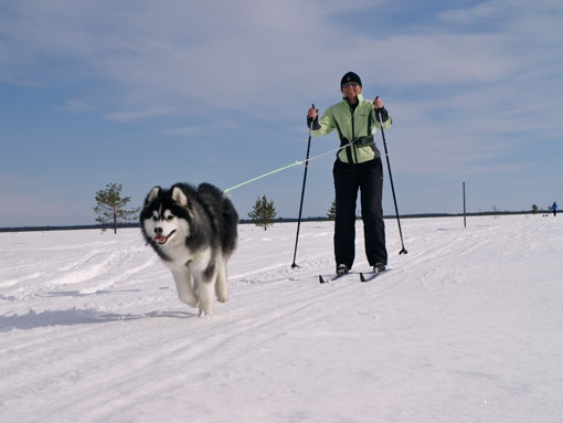 PICT Back Country Skier and Dog - CPW