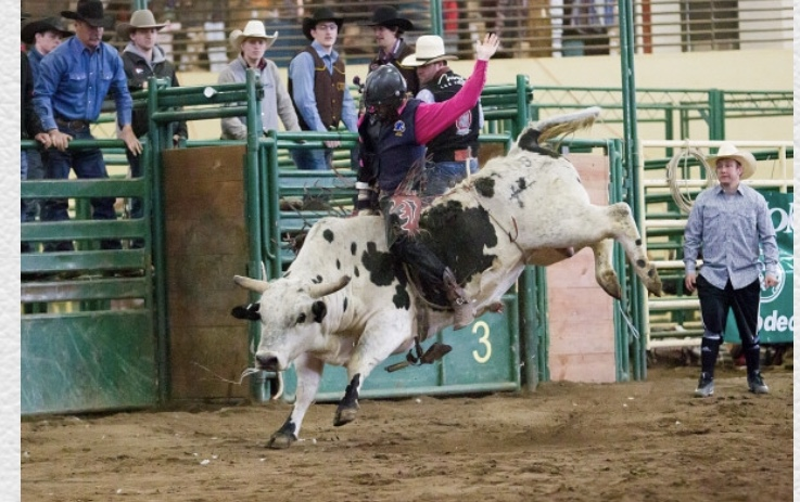 PICT Nate Hoey Bull Riding Skyline Stampede Rodeo - LCC