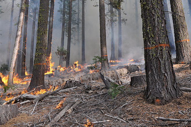 PICT Low Intensity Controlled Burn Forest - Eric Knapp USFS