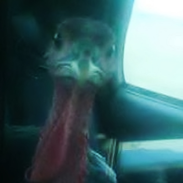 PICT Turkey in Vehicle - CPW