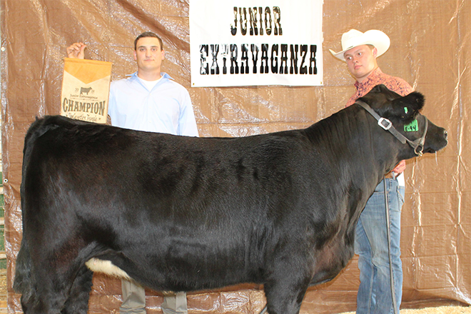 PICT Bryce Hill's  heifer named Overall Simmental Champion Female