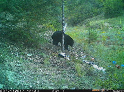 PICT Bear spotted on a game camera - CPW