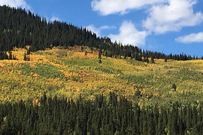 PICT Fall Tree Colors 1 - Chris Sorensen