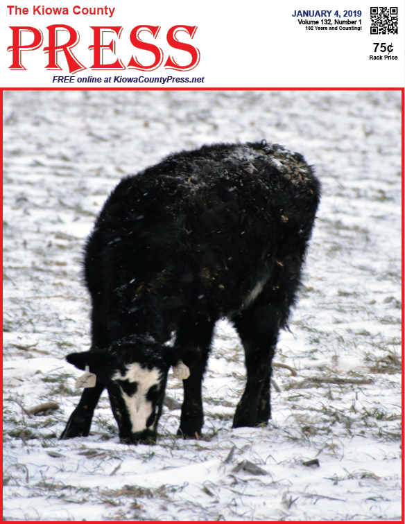 Photo of the Week - 2019-01-04 - Calf foraging in the snow
