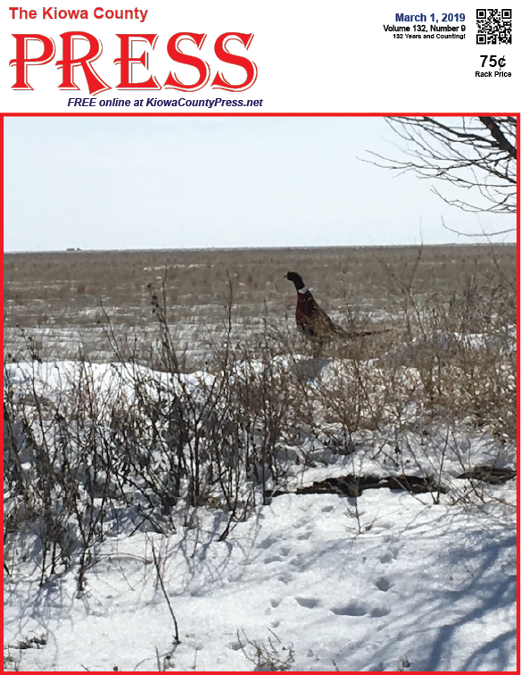 Photo of the Week - 2019-03-01 - Pheasant in the snow