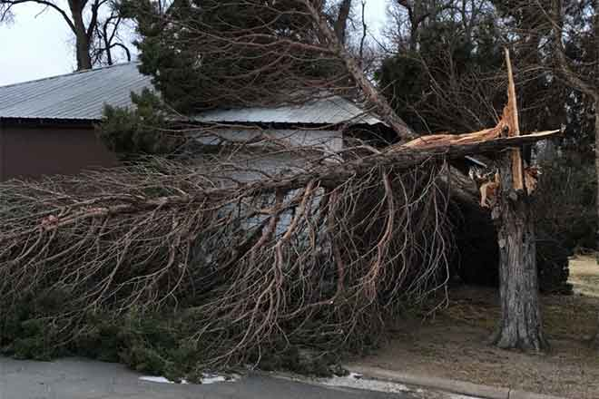 PICT Broken Tree in Eads - Jeanne Sorensen