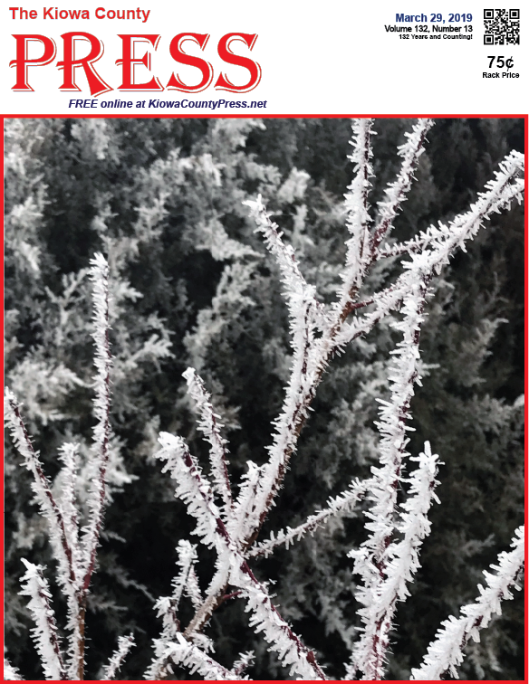 Photo of the Week - 2019-03-29 - Frosty Branches