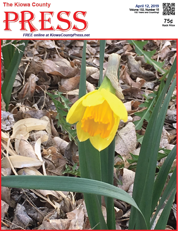 Photo of the Week - 2019-04-12 - Daffodil