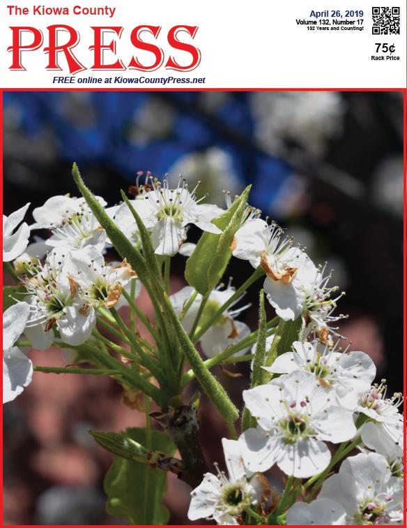 Photo of the Week - 2019-04-26 - Pear tree blossoms - Eads, Kiowa County, Colorado