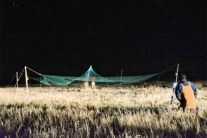 PICT 64J1 Net Capturing Lesser Prairie Chickens - CPW