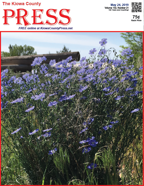 Photo of the Week - 2019-05-24 - Blue flax in bloom near Eads in Kiowa County, Colorado