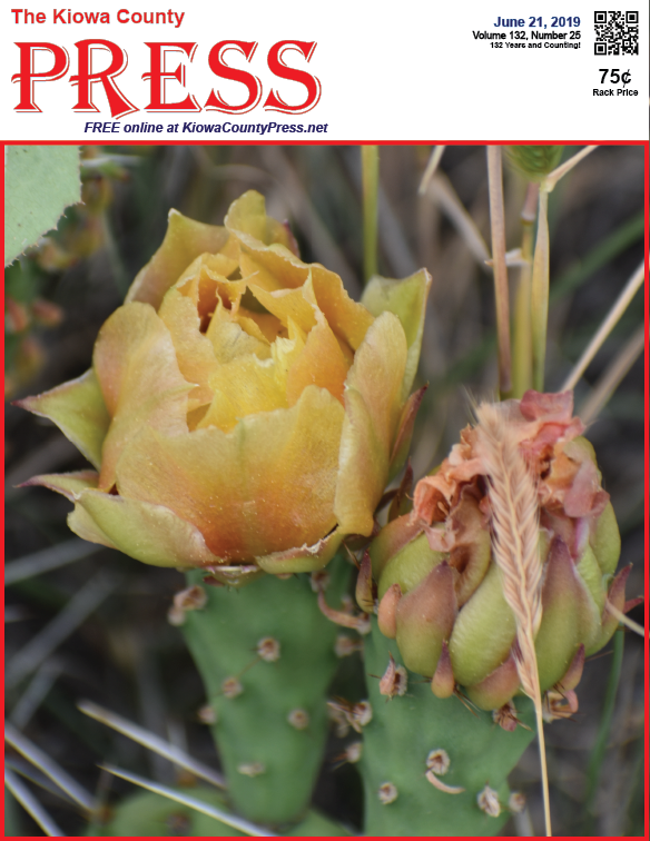 Photo of the Week - 2019-06-21 - Cactus in bloom following recent rains near Eads, Kiowa County, Colorado