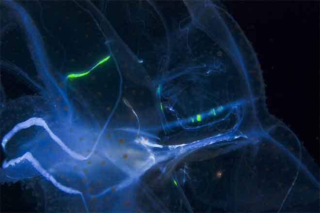 PICT Example of Bioluminescence - EarthTalk - FlickrCC - Joshua Lambus