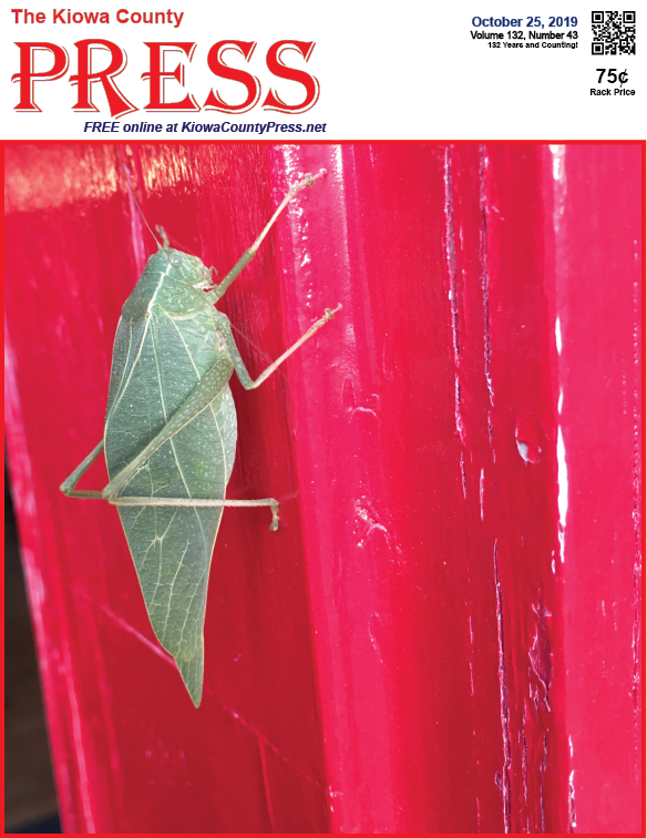 Photo of the Week - 2019-10-25 - Katydid taking shelter from the cold at the Kiowa County Press office in Eads, Colorado.
