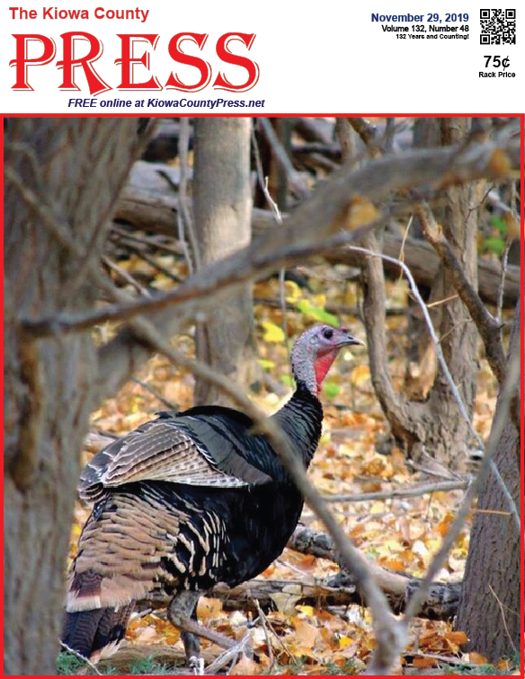 Photo of the Week - 2019-11-29 - Turkey in the wild in southeast Colorado.