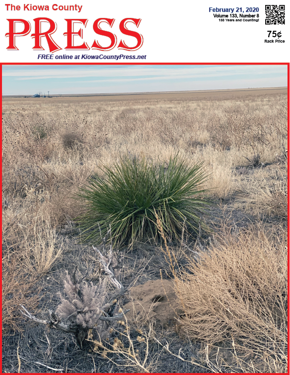 Photo of the Week - 2020-02-14 - Yucca provides a welcome spot of green among dormant prairie plants in Kiowa County, Colorado.