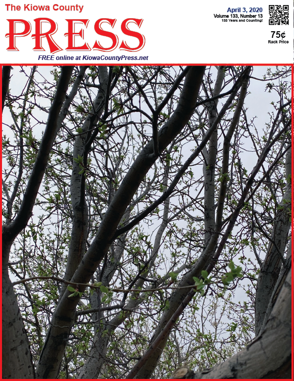 Photo of the Week - 2020-04-03 - New leaves emerging on a tree in Eads, Kiowa County, Colorado.