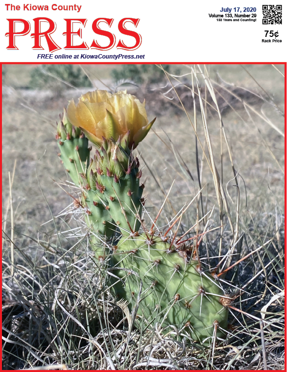 Photo of the Week - 2020-07-17 - Cactus in bloom in Kiowa County, Colorado.