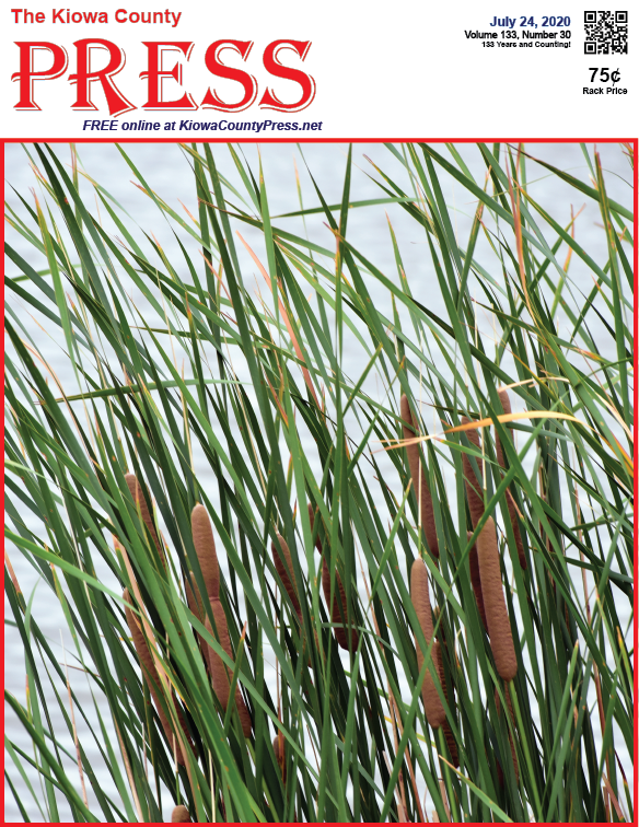 Photo of the Week - 2020-07-24 - Cattail reeds on Jackson's Pond south of Eads in Kiowa County, Colorado.