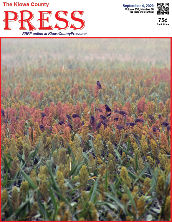 Photo of the Week - 2020-09-04 - Birds feeding on ripening milo south of Eads in Kiowa County, Colorado.