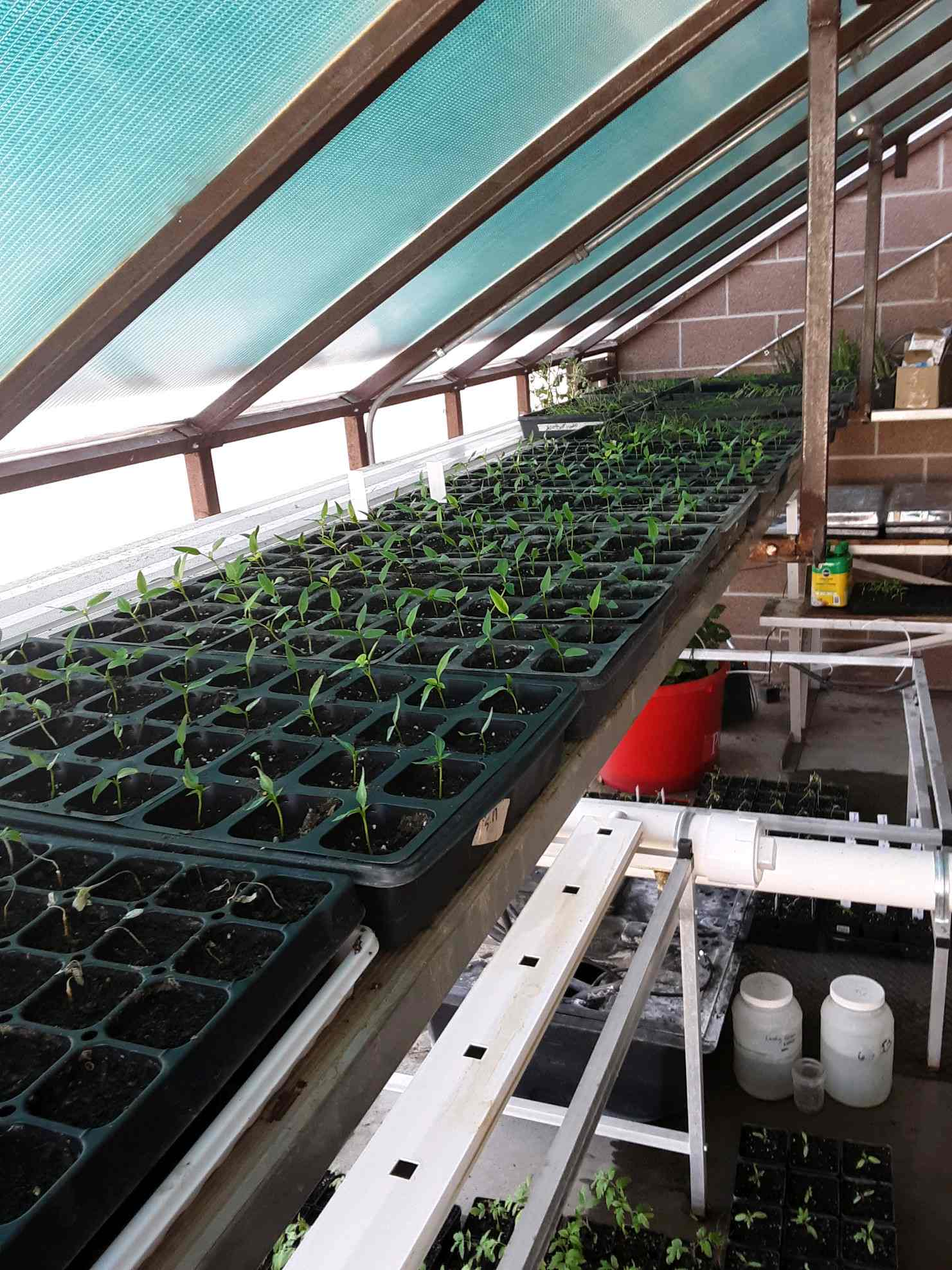 SCHOOL  Hi Plains Seedlings Steve Poet