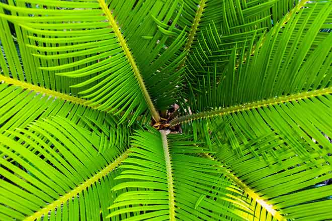 PICT 64J1 EarthTalk palm tree - Pixabay