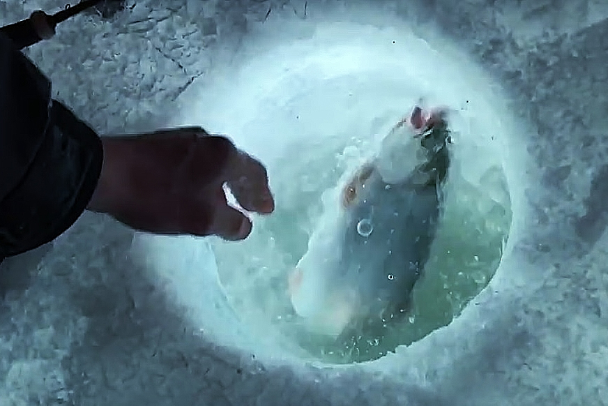 PICT Catching a fish through the ice - CPW - Jason Clay