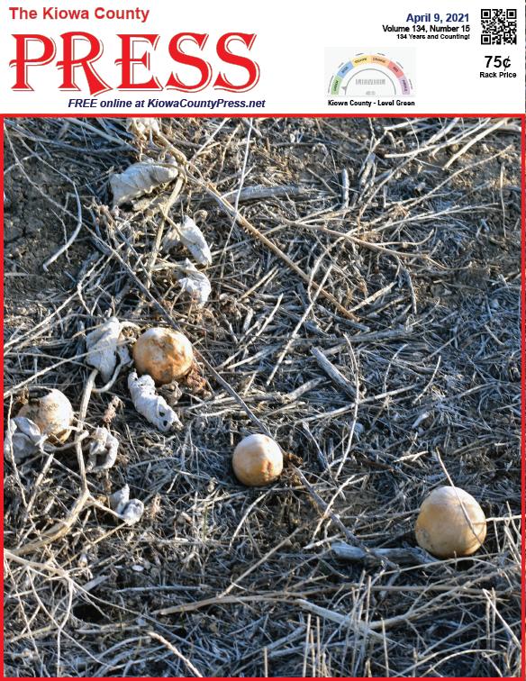 Photo of the Week - 2020-04-09 - Wild gourds in Kiowa County, Colorado - Chris Sorensen