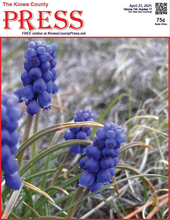 Photo of the Week - 2021-04-23 Grape hyacinths in bloom near Eads, Kiowa County, Colorado - Chris Sorensen