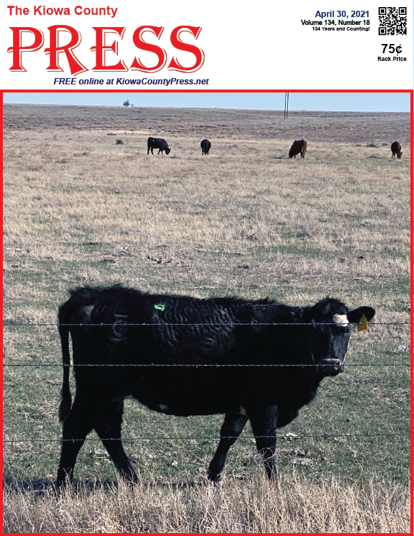Photo of the Week - 2020-04-30 - Cattle in Kiowa County, Colorado - Chris Sorensen