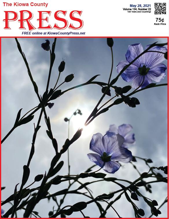 Photo of the Week - 2020-05-28 - Blue flax in the sunlight in Kiowa County, Colorado - Chris Sorensen
