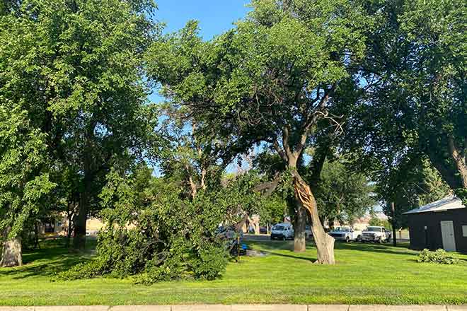 PICT Damaged tree at the Kiowa County Courthouse in Eads from a storm July 9, 2021 - Chris Sorensen