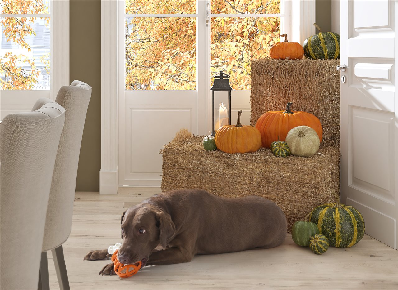 PICT - Dog Toy Pumpkin House Hay - BrandPoint ONLY