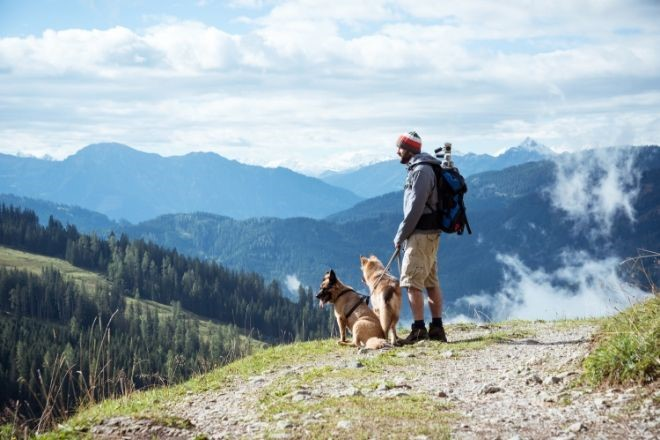 4 Dog Friendly Activities In Colorado To Enjoy This Summer