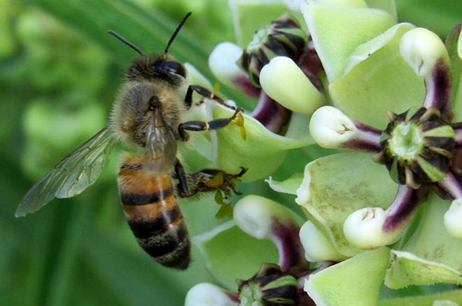 PROMO 660 x 440 Animal Bee