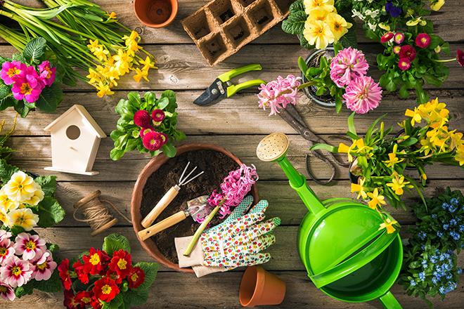 PROMO 660 x 440 Garden - Tools Flowers Plants Glove Bird House - iStock