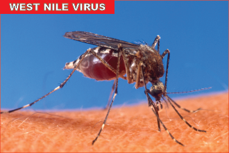 Mosquito - West Nile Virus