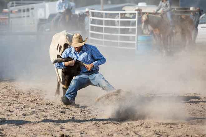 PROMO Rodeo - Cowboy Steer Wrestling Fair Horse - iStock - diane39