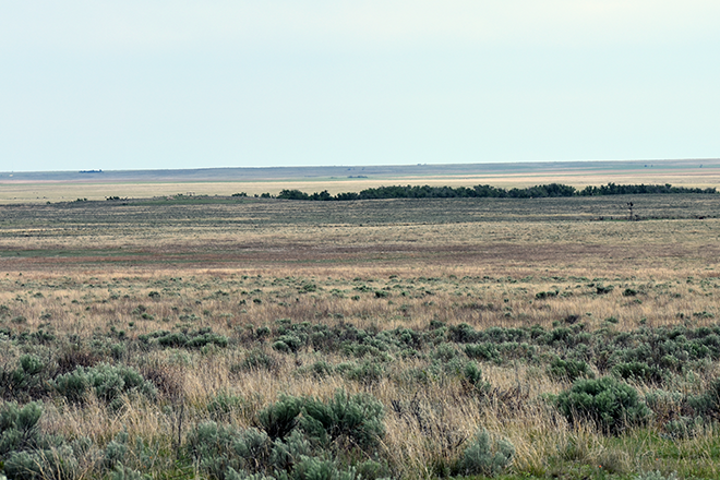 PROMO 660 x 440 Miscellaneous - Prairie Sage Brush Sand Creek Kiowa County Colorado - Chris Sorensen