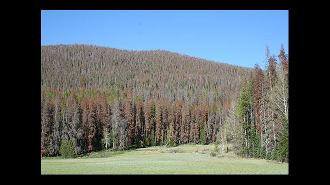 Forest Service Extends Deadline to Apply for Temporary Jobs