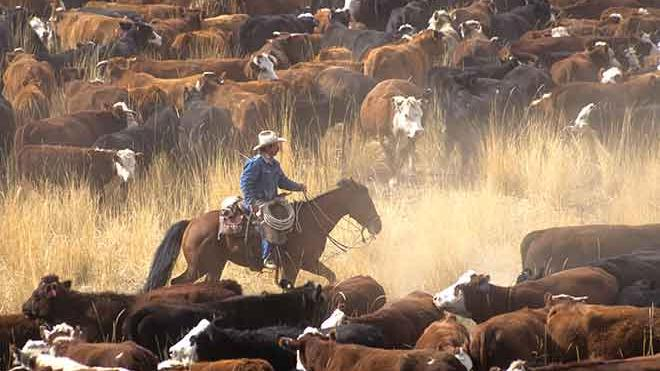 BLM and Forest Service Announce 2018 Grazing Fees