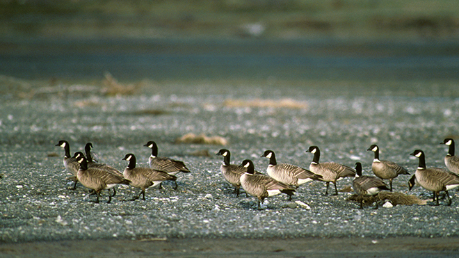 Hunters Can Expect Another Good Waterfowl Season
